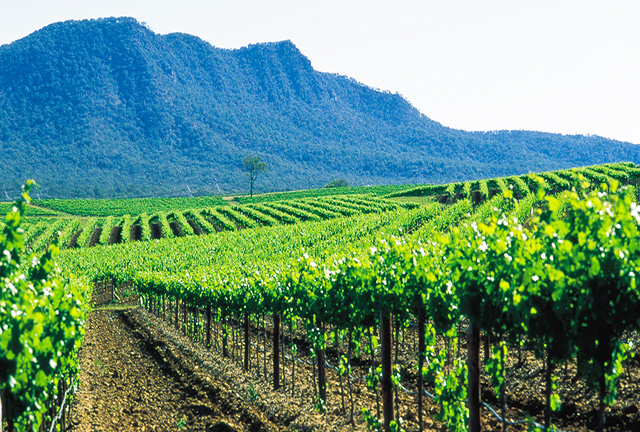 Hunter Valley tours from Sydney